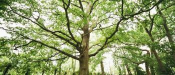 Fête de l\arbre et des plantes Arès