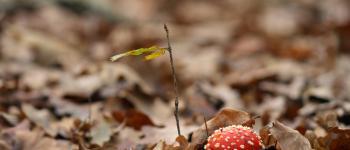 Week-end de formation mycologie Brocas