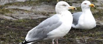 Conférence/échange sur les oiseaux du littoral Saint-Jean-de-Luz