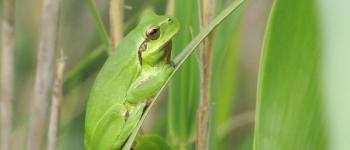 Sortie LPO : Où trouve-t-on des amphibiens sur la commune ? Andernos-les-Bains