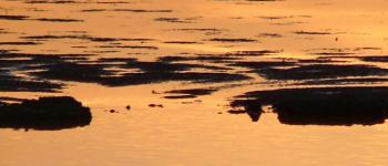 Natura 2000 « Comment favoriser l'accueil d'espèces et habitats d'intérêt communautaire dans sa propriété » Labenne