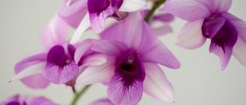 Atelier Rempotage - Multiplication d\Orchidées Montpouillan