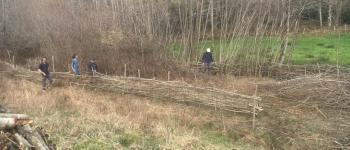 Plessage de haies champêtre Cambo-les-Bains