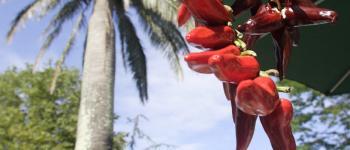 Rendez-Vous du Palmier Hendaye
