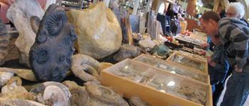 41ème salon Minéraux-Fossiles Thouars