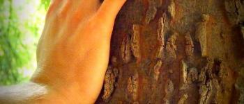 Une parenthèse verte : la Sophro balade Moliets-et-Maa