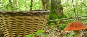 Sortie champignons Arès
