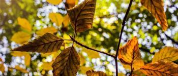 Le Moulleau fête l\automne Arcachon