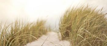 Balade nature: Le Sentier de la Dune : Écologie et flore du littoral, richesse et fragilité des dunes... Capbreton