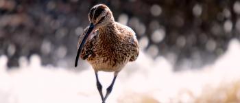 Sorties nature : initiation aux oiseaux de plaine Clussais-la-Pommeraie