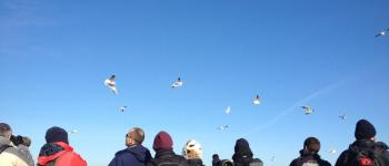 Week-end d'initiation à l'ornithologie : la fin de l\hivernage et le retour des premiers migrateurs Le Teich