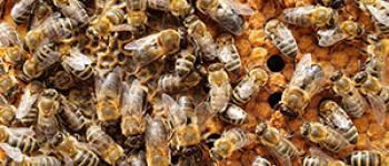 Excursion Le miel de A à Z au Rucher de Claron Aire-sur-lAdour