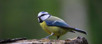 Animations à la découverte des oiseaux Sauzé-Vaussais