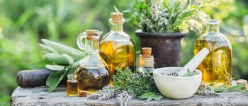 Stage de reconnaissance de plantes sauvages comestibles et médicinales Buros