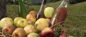 Variations autour de la pomme Ascarat