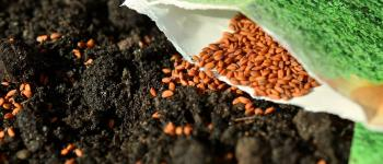 Foire aux plants Melle