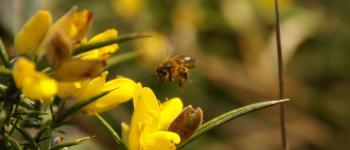 Le trésor des abeilles Anglet