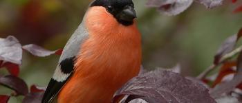 Sortie nature : initiation aux chants des oiseaux - ANNULE La Nouaille