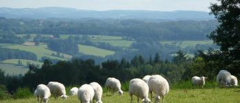 De villages en sonnailles : la transhumance vers l'estive du Lac de Vassivière La Nouaille