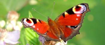 Papillonner au bord de l\eau Lussat